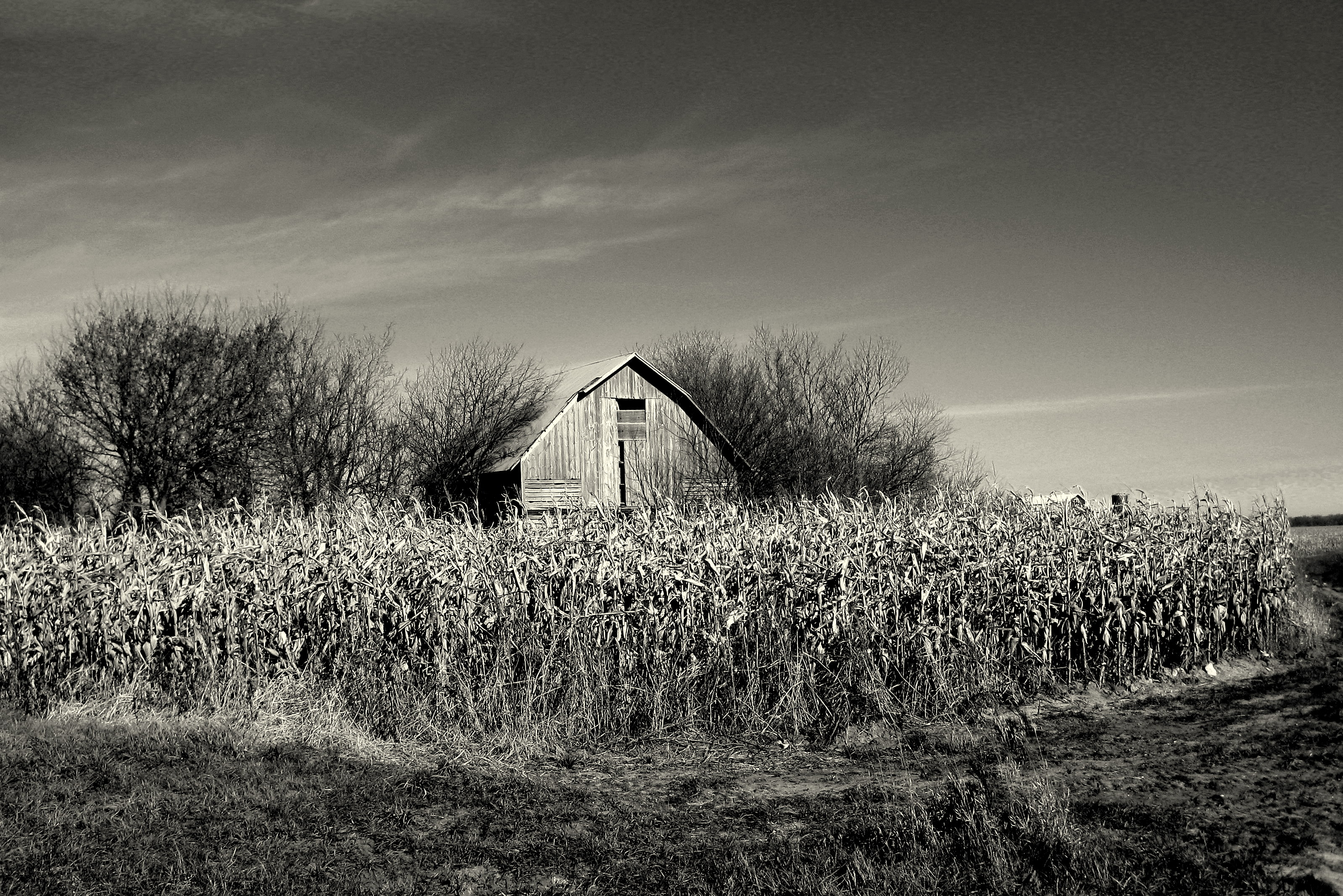 Dilapidated Barn Brian Gaynor Photography
