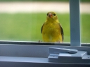 Little Bird on the Window Sill