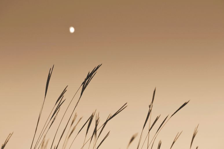 Moon on the Prairie