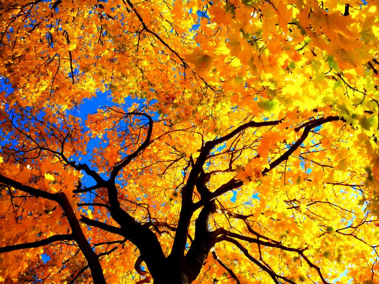 Explosion of Colors