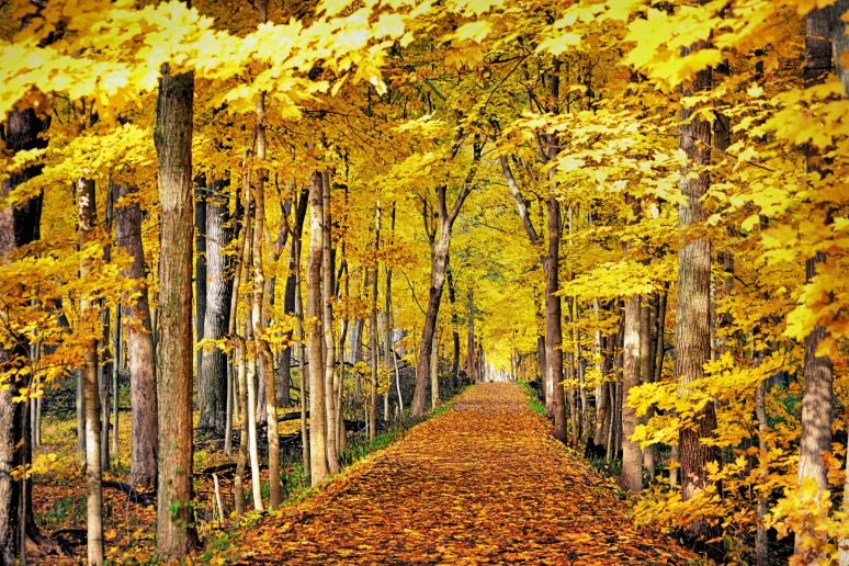 Autumn Path Art