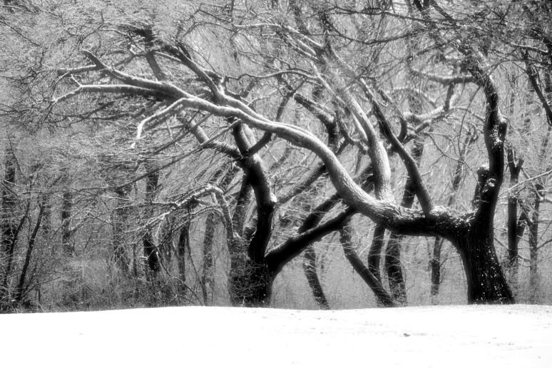 Branches Artistic