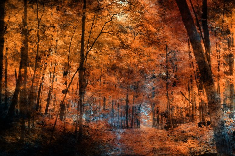 The Artistry of the Forest