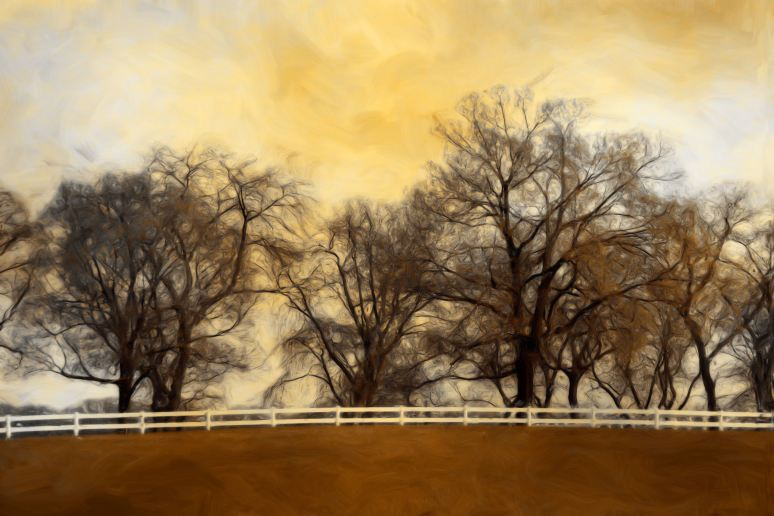 The Willows Art
