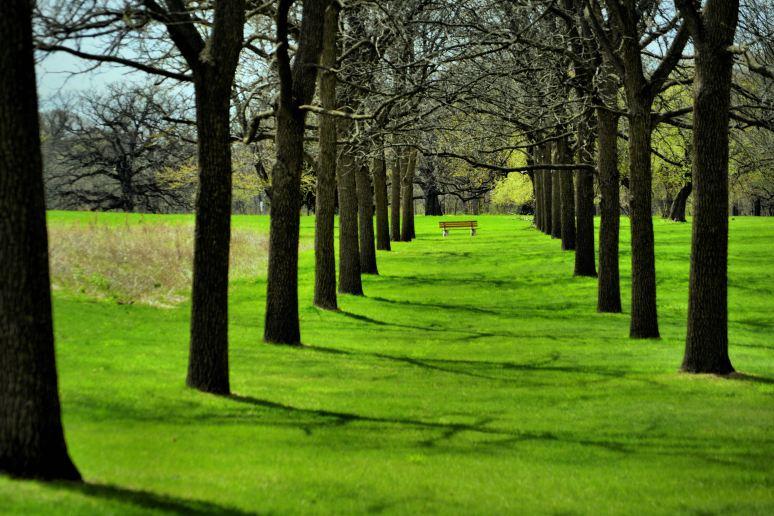 Tree Symmetry