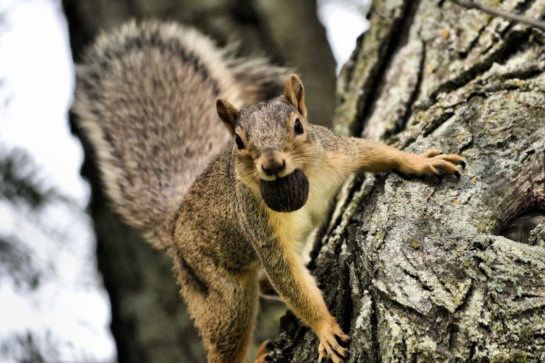 Playful Squirrel