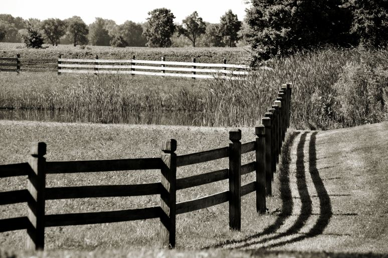 Morning Fence Shadows Art