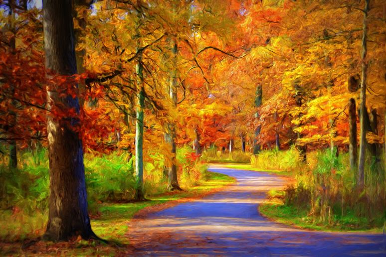 Enveloped in Fall Colors