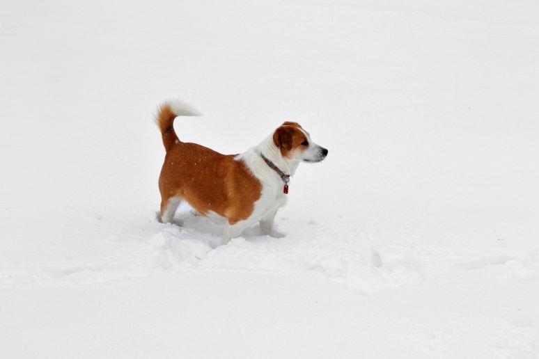 Interrupting the Winter Whiteness