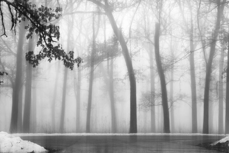 Blurred Trees in the Fog Art