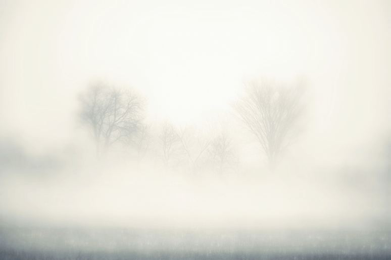 Trees in the Fog Art