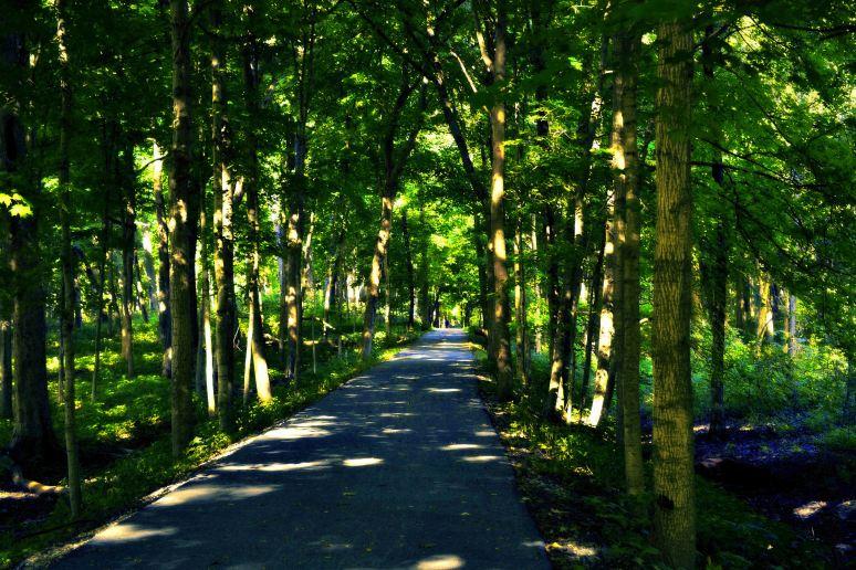 dappled-path-art